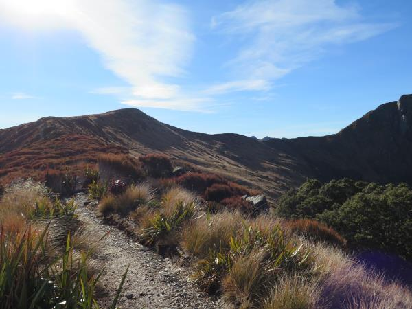 On The Tussock Tops