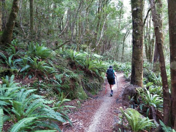 The Old Ghost Road: Fern Forrest Through Remote Valleys