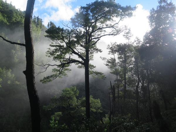 Misty Morning In Mokihinui Gorge