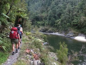 Walking along the Mohikinui Gorge